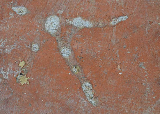A chicken's footprint in a clay tile