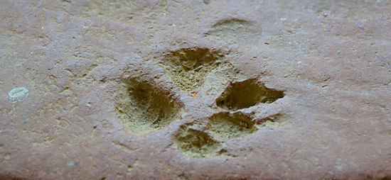 A paw-print in a clay tile