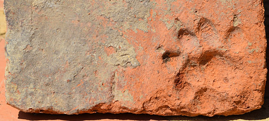 The paw-print of a dog in a terracotta tile
