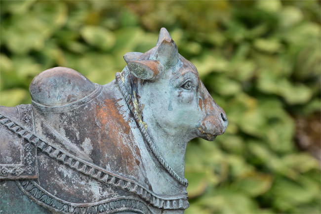 12/12 A Brahmin Bull from the entrance walkway into Sezincote
