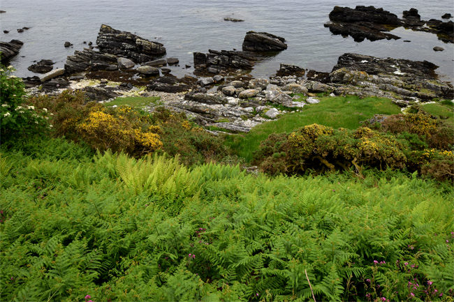 Looking down onto the Kintyre shoreline