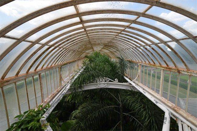 Up inside one of the flanking wings of the Palm House