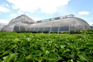 Kew Gardens and the Temperate House